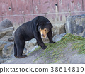 곰, 동물, 동물원 38614819