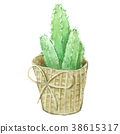 Watercolor Cactus , isolated on white background 38615317