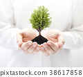 Growing green tree in hands  38617858