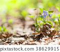 산책로에 자리한 제비꽃의 꽃 38629915