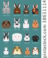 动物 兔 兔子 38631114