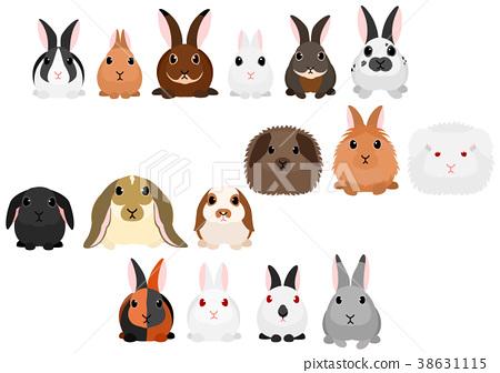 矢量 動物 兔 38631115