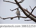 wild bird, bird, birds 38632250