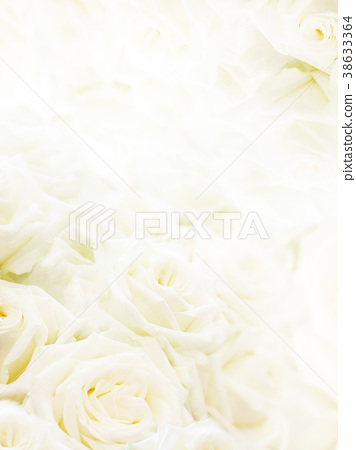 flower, flowers, rose 38633364