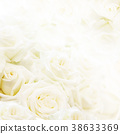 flower, flowers, rose 38633369