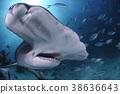 鯊魚 魚 斧頭 38636643