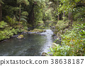 Whangarei Waterfalls New Zealand North Island 38638187