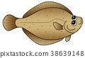 righteye flounder, flounder, fish 38639148