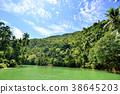 rain, forest, rainforest 38645203
