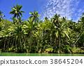 rain, forest, rainforest 38645204