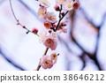 梅 神殿 日本 38646212