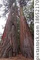yosemite, yosemite national park, botanic 38652170