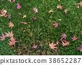 단풍나무, 단풍, 단풍놀이 38652287