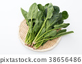 菠菜 38656486