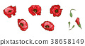 Red poppies isolated on white background.  38658149