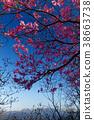 우츠노미야 삼림 공원 · 古賀志山 아카 야시 진달래와 닛코 연산의 전망 38663738