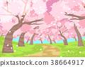 벚꽃 피는 길 38664917