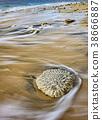 Coral stone on the sea beach 38666887