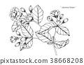ดอกไม้,เอกรงค์,โมโนโทน 38668208