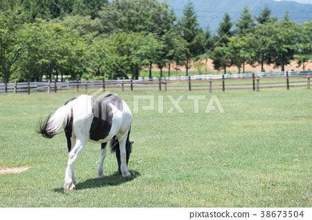 Ranch 38673504