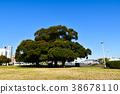 나무, 공원, 파크 38678110