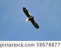 Flight of St. 38678877