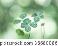 비가 갠 뒤의 네 잎 클로버 38680086