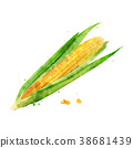 Corn on white background. Watercolor illustration 38681439