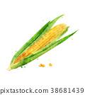 玉米 穀物 稻田 38681439