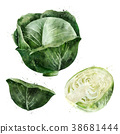 Cabbage on white background. Watercolor 38681444