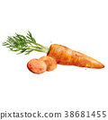Carrot on white background. Watercolor 38681455