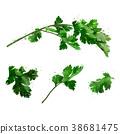 芫荽葉 綠色 綠 38681475