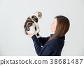 고양이, 스코티시폴드, 스코티쉬폴드 38681487
