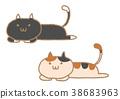 猫 猫咪 小猫 38683963