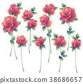 玫瑰 玫瑰花 花朵 38686657