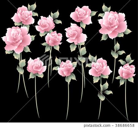 玫瑰 玫瑰花 花朵 38686658