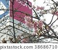 kawazu cherry blossoms, bloom, blossom 38686710