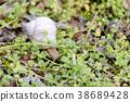 snail helix garden 38689428