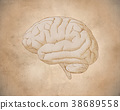 Vintage brain drawing with old paper texture 38689558