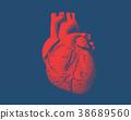 heart, human, drawing 38689560