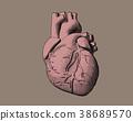 heart, human, drawing 38689570