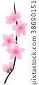 손그림, 식물, 꽃 38690151