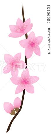 手绘 植物 植物学 38690151
