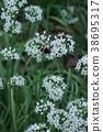 부추, 등에, 꽃 38695317