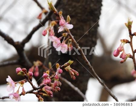 ดอกไม้,ฤดูหนาว,ท้องฟ้าเป็นสีฟ้า 38696863