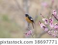 小鸟 红尾鸲 花朵 38697771