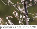 鸟儿 鸟 春天 38697791