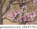 小鸟 红尾鸲 花朵 38697793