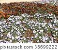 viola, flower, flowers 38699222