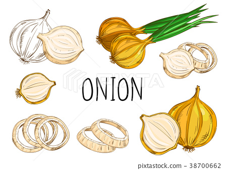 Onion isolated on white background 38700662